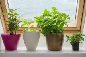 kitchen window - plants